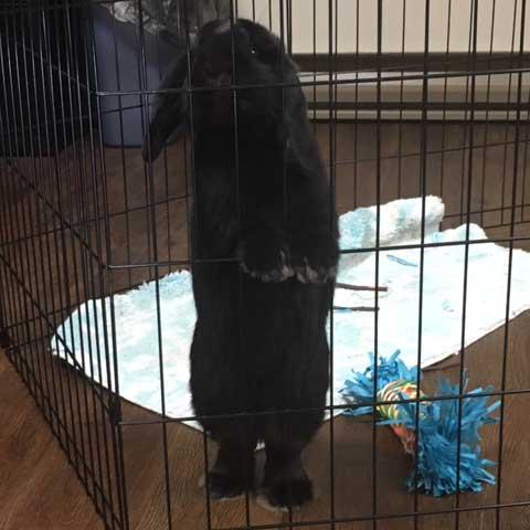Pet Rabbit in Cage at Kadima at Luzerne Nursing and Rehabilitation Facility